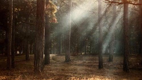 2bc47b23-woods-